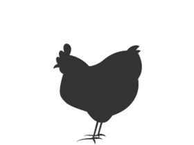 Gevogelte - Kip, kalkoen, eend, kwartel, gans, parelhoen, duif & konijn geselecteerd voor uw smaak.