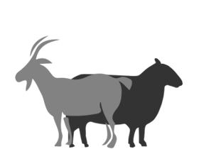 Agneau & Chèvre - Une belle sélection d'agneau et de chèvre de qualité exceptionnelle.