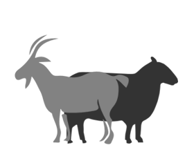 Lam & Geit - Een mooie selectie lam en geit van uitzonderlijke kwaliteit.
