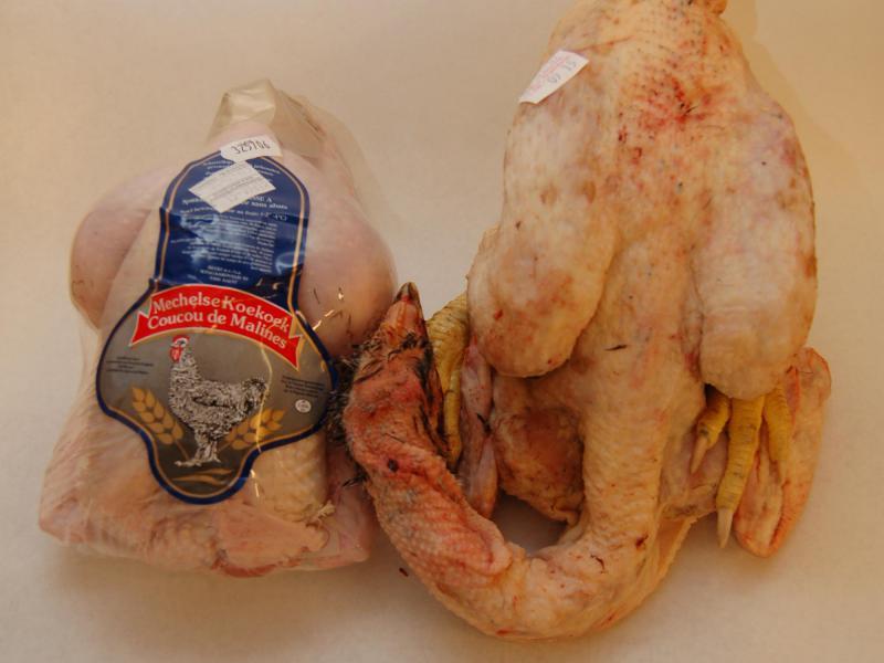 Poulet - Le coucou de Malines est un poulet fermier, reconnu dans le monde de la gastronomie, qui mérite sa place dans notre sélection des meilleures volailles.