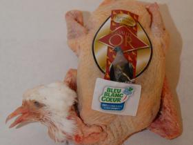 Pigeonneau fermier du Poitou - Une alimentation riche et saine, un environnement naturel, une hygiène très stricte et une traçabilité parfaite. Le respect du cahier des charges nous donne l'assurance d'avoir des pigeonneaux d'une qualité exceptionnelle.