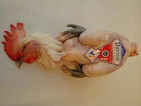 Hoevekip Bresse - Onmiskenbaar de beroemdste kip, gewaardeerd door iedere gastronoom, vlot verkrijgbaar bij ons. Poulardes zijn ook beschikbaar op bestelling.