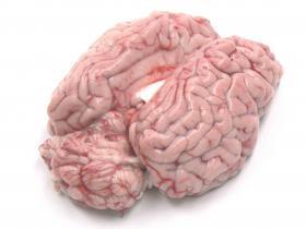 Hersenen - Dierenwelzijn, rust en vrijheid voor de kalveren komen tot uiting in de kwaliteit en de smaak van het Peter's Farm kalfsvlees.