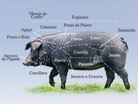Duroc 100% (Batallé) frais - Depuis de nombreuses années un produit phare chez nous, vous pouvez reconnaitre le porc 100% Duroc Batallé par ces longs cheveux et sabots noirs.