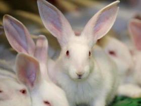 Konijn - hier vindt u onze selectie aan konijnen. Wij bieden zowel Franse als Belgische aan.